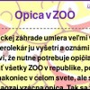Opica v ZOO