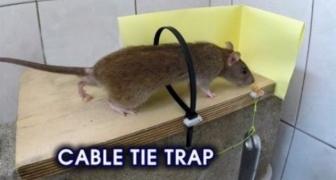 Ako si spraviť originálnu pascu na hlodavce pomocou viazača káblov