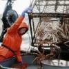 Rybolov lososov pre výrobu kaviáru na Aljaške