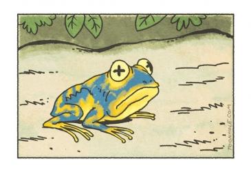 Jedovatá žaba