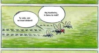 Komári a prilba