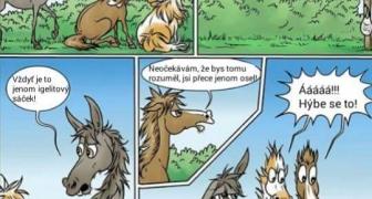 Konšpirujúce kone a osol