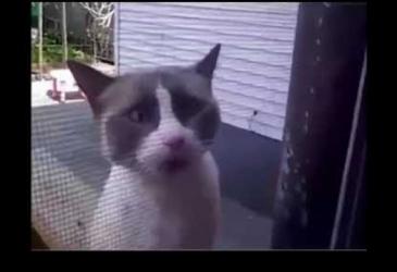 Mačky vedia hovoriť po anglicky