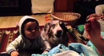 Malé dieťa sa snažia naučiť slovo mama. Pri ňom sediaci pes ho však predbehne!