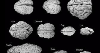 Mozgy človeka a zvierat