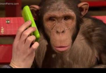 Opice reagujú na kúzla