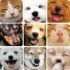 Radostné výrazy domácich zvieratiek