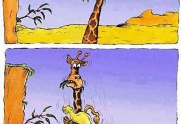 Skok leva VS žirafa