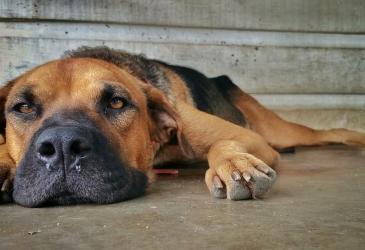 Toto si dobre prečítajte, než pôjdete utratiť svoje domáce zviera k veterinárovi