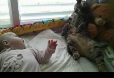Zmätená mačka si nevie dať rady s miminkom