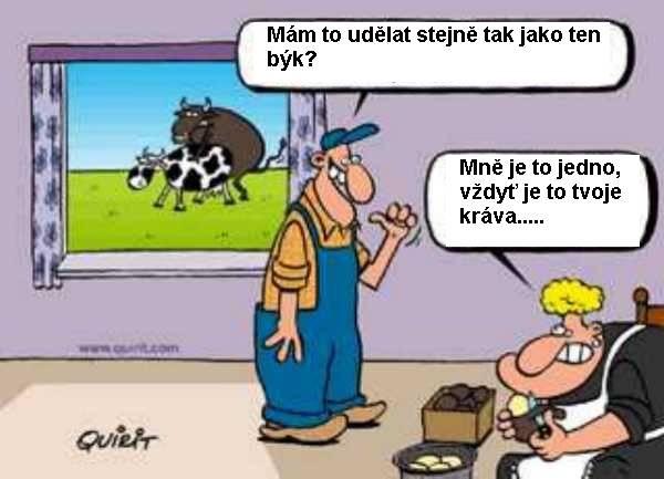 Ako býk?