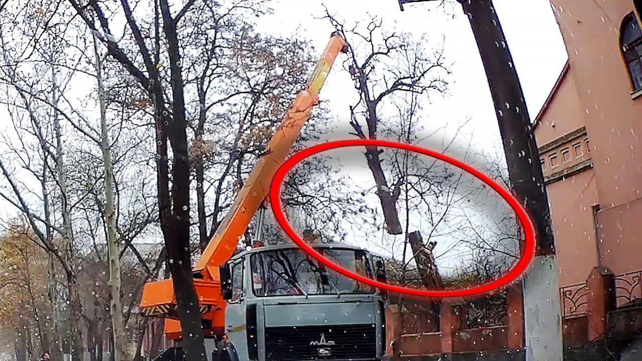 Úžasné rýchle zručnosti na odstránenie starých a nebezpečných stromov