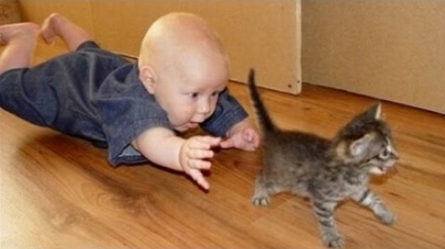 Keď sa spolu hrajú bábätká a mačky