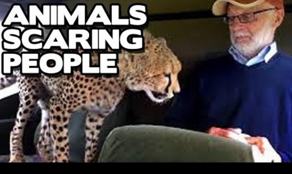 Keď zvieratá strašia ľudí