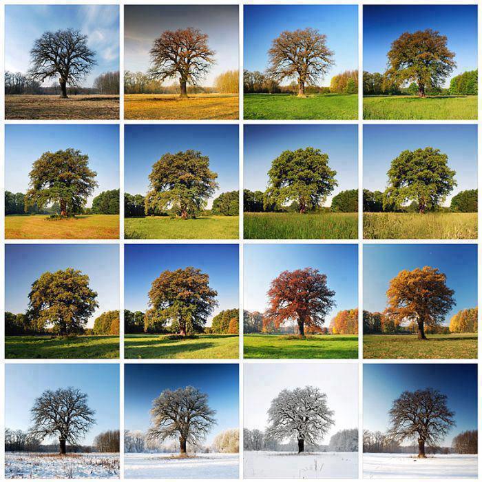Krása ročných období