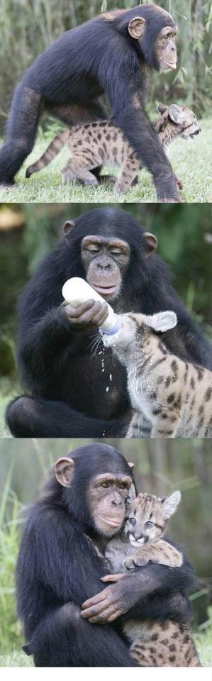 Láska vo svete zvierat
