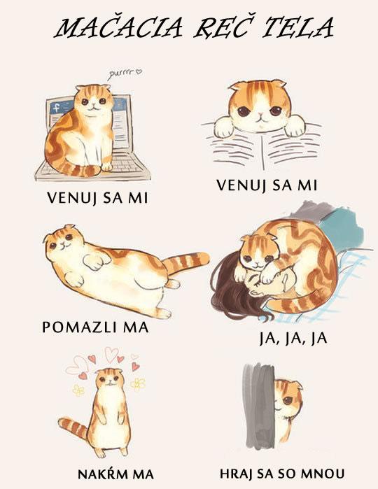 Mačacia reč tela