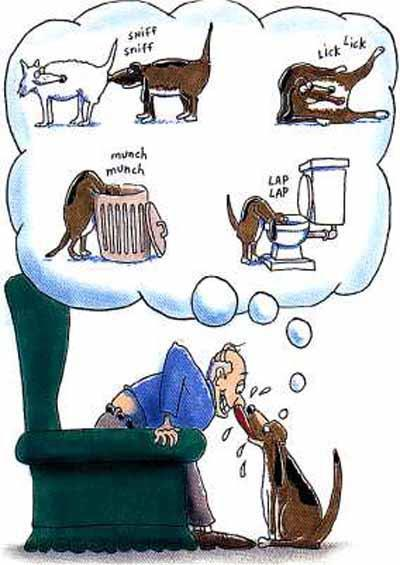 Na čo myslí pes?