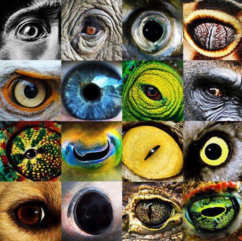 Oči z ríše zvierat