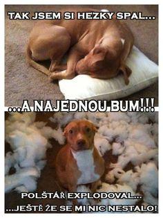 Úplne nevinný pes